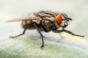 Una pequeña molécula logra regenerar las conexiones neuronales en modelos de mosca con Alzheimer